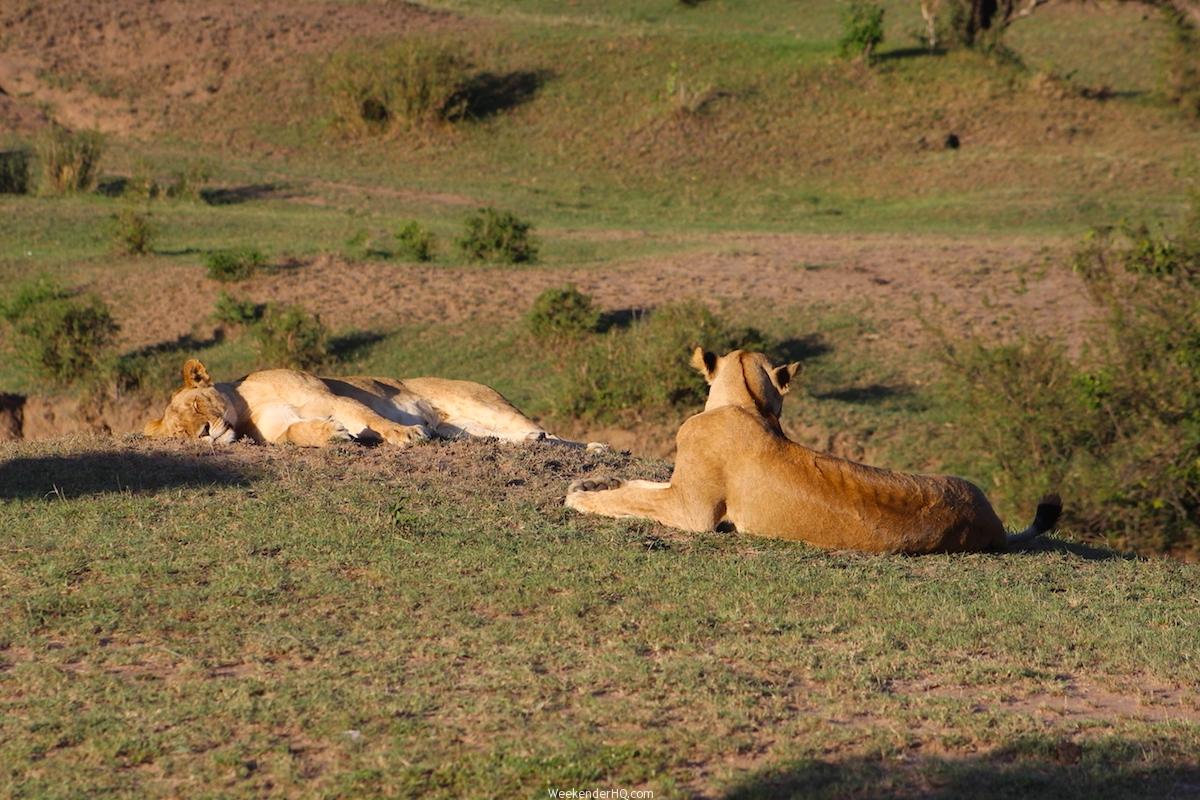 Los mejores destinos de África Safari